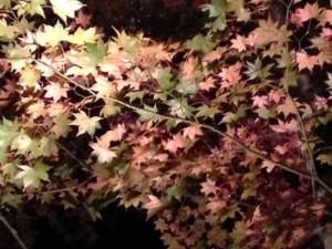 紅葉まつり2