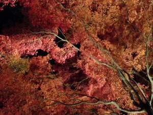 紅葉まつり1