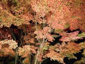 紅葉まつり3