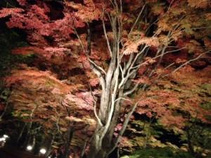紅葉まつり5