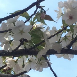 昭和記念公園27