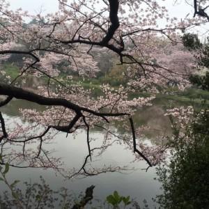 三ッ池公園17