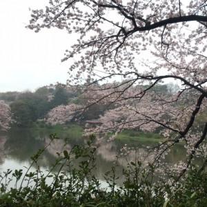 三ッ池公園16
