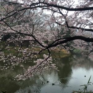 三ッ池公園15
