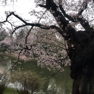 三ッ池公園2