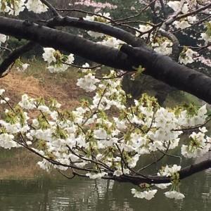 三ッ池公園21